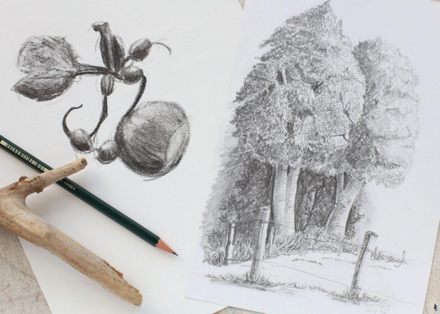 Workshop natuurtekenen - Bomen tekenen