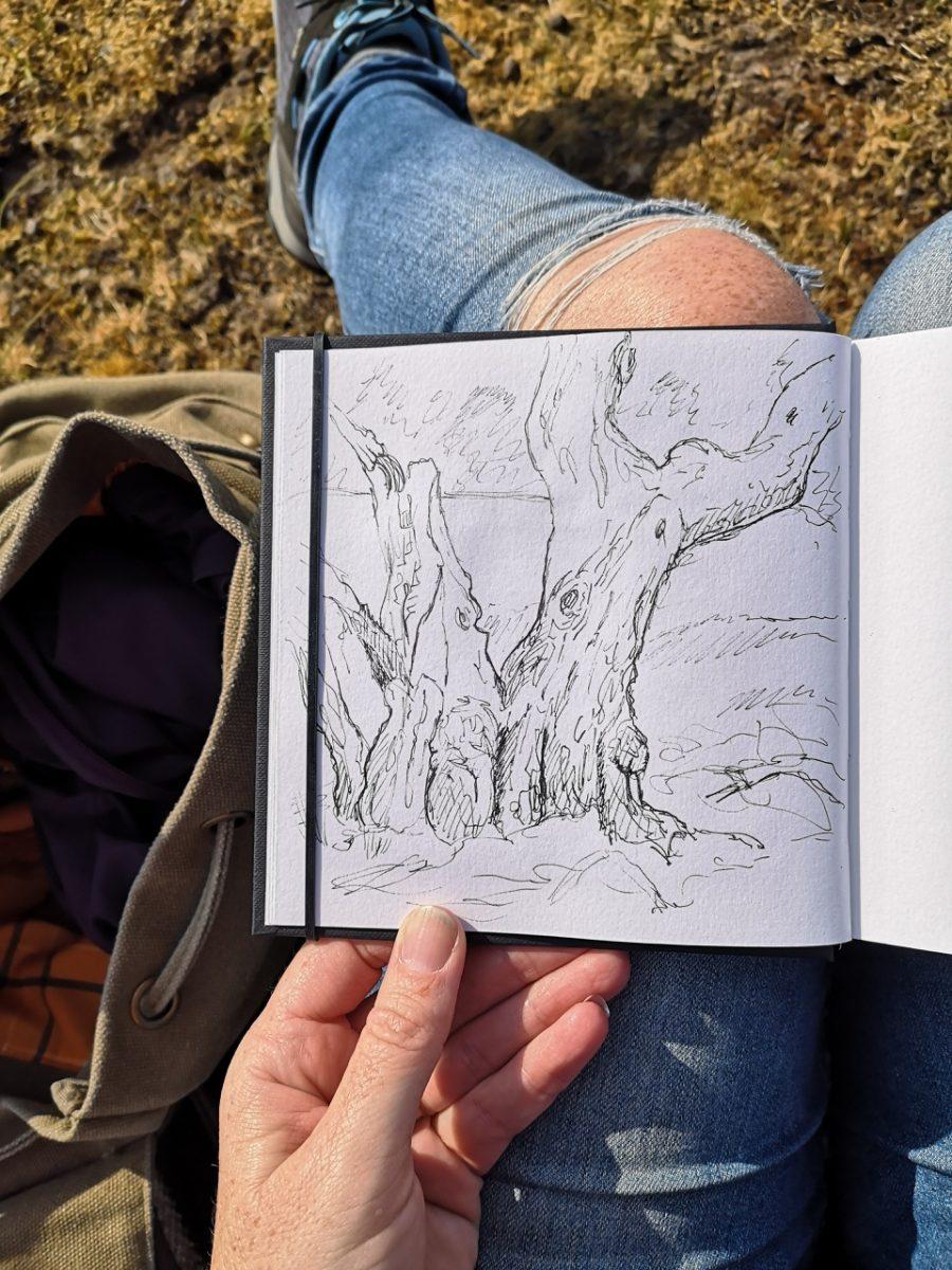 Oude boom tekenen in mijn schetsboek