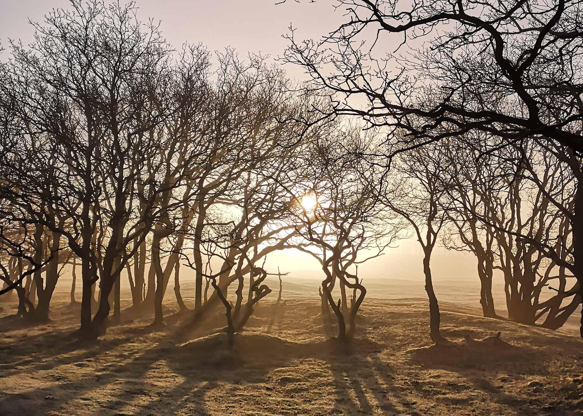 bomen fotograferen met tegenlicht zonsopkomst